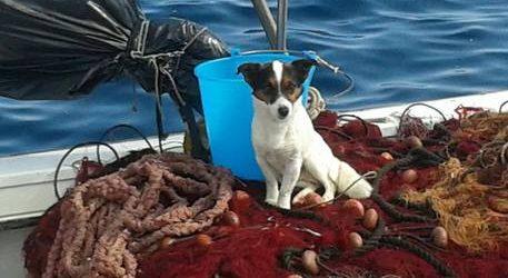 Lipari: Cane abbandonato si getta in mare, salvo